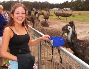 Programs - Emu Feeding Jervis Bay | Professional Education Programs Abroad
