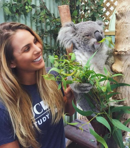 Programs - Koala @ Zoo | Professional Education Programs Abroad